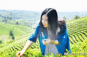 河南这座城市没有工业,800万人100万种茶,年产值112个亿