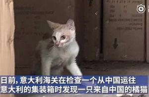 可怜又无助!8个月中国小橘猫被误关集装箱漂洋过海…