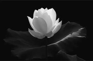描写莲花并带着禅意的句子都有什么