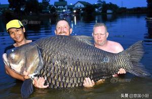 搏斗 80 分钟钓起世界最大鲤鱼,三人一起才举出水面