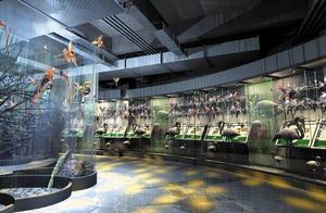 周末新去处。昆明的教场东路上,有中国西南最大的动物专题博物馆