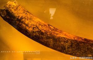 古物寻踪实拍一根来自金沙遗址的象牙