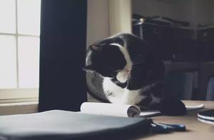 求教沈阳跟阜新的宠物业行情.希望您能帮助我
