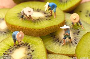 陕西新鲜水果绿心猕猴桃 日发货几10车 价格却过山车怎么回事?