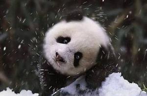 香港法律规定:对大熊猫发火监禁1个月,破坏花花草草罚2.5万港币