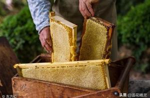 意蜂到底是凭什么高产?真的是因为白糖造假或产水蜜吗?