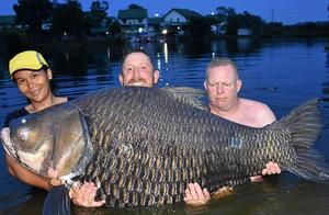 105公斤的鲤鱼!搏斗80分钟,英国男子泰国钓起世界最大鲤鱼