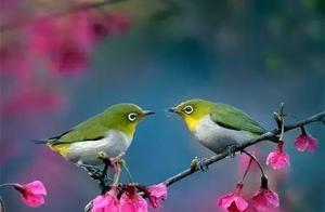 哪一首诗表示春天充满勃勃生机,生命力不可阻挡