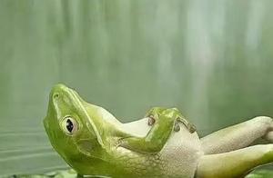 描写青蛙的诗句五句