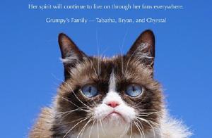 网红不爽猫去世,表情包风靡世界,还和斯坦李合过影