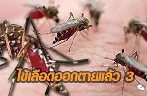 游客注意!泰国1月份前9天中已发现3人死于登革热
