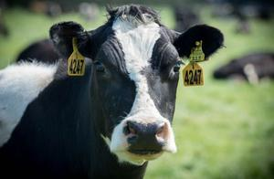 新西兰高端奶天猫618两小时卖出25万盒 八成消费者来自三四五线城市