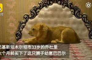 男子在家中散养狮子,从不用链子拴住它,让它睡床上还吹空调