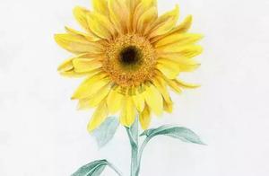 画一朵向日葵,心向阳光!