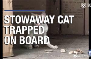 中国小橘猫被误关集装箱运到米兰