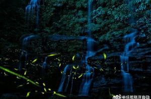 成都天台山第二波萤火虫开始进入观赏高峰期