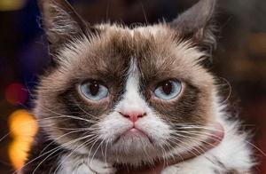 表情包不爽猫去世怎么回事?表情包不爽猫去世原因它是怎么走红的