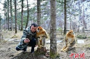 (新中国70年)湖北神农架:人猴互动 其乐无穷