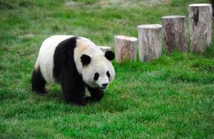 """中国最有""""好感""""的城市,游客们来了就不想离开,简直有毒!"""