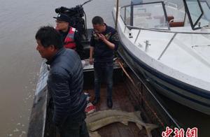 """黑龙江渔民误捕 88 斤""""活化石""""——雌性达氏鳇"""