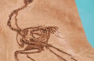 美国华盛顿自然历史博物馆重新开放恐龙与化石展馆