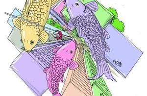 投放病毒治鲤鱼泛滥?研究方案在澳引争议