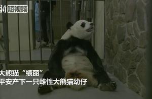 2019年全球首只圈养大熊猫幼仔平安出生