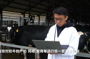"""奶牛连上物联网 阿里云联合蒙牛启动""""数字奶源计划"""""""
