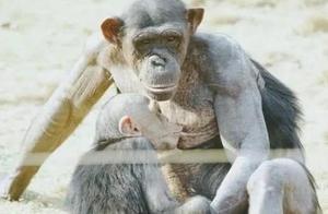 生肖猴:最不宜跟哪个属相结婚?古人说的错不了