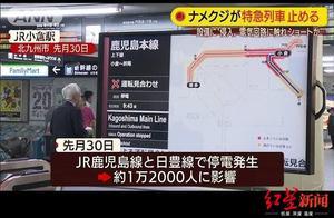 数十班列受阻,逾万乘客延误……一只鼻涕虫搞乱日本铁路