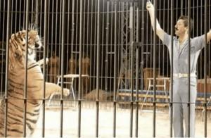 意大利著名驯兽师遭4只老虎玩弄半小时惨死 同事只能看着束手无策