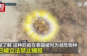 玩过了!韩国女星为拍真人秀在泰国违法捕捉濒危巨蛤 面临5年刑期
