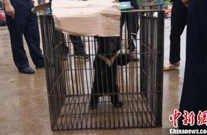 云南一男子捡回小黑熊 喂养两月后上交森警