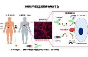 磐霖资本 Pre-A 轮领投肿瘤微环境响应型药物研发平台亲合力