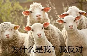 羊毛大衣的十大好处