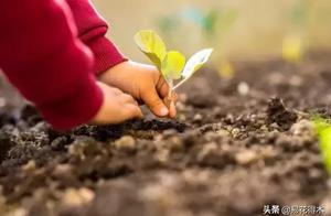 家有儿女,适合栽植什么花卉植物?