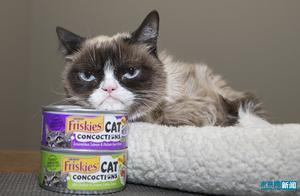 享年7岁!表情包不爽猫去世 曾为主人带来一亿美元收入