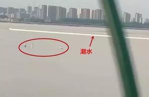 钱塘江里3人被潮水卷走!看到这个致命杀手,不要犹豫立马上岸!