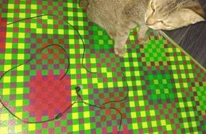 硬核的爱!小猫咬坏主人耳机线后竟带回一条蛇赔给主人!