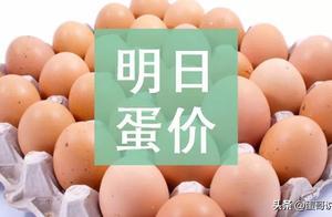 明日(5月25日)鸡蛋价格预测