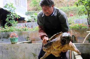 俗语:千年的王八万年龟,百年的兔子无人追,背后的含义少有人知
