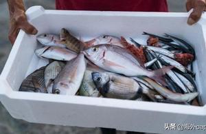 食品安全:用信息链截停受污染的海鲜