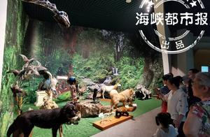 """""""贵宾犬""""""""北极狼""""住进福建省博自然馆"""