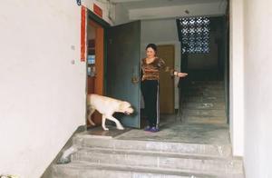 50岁大姐训练拉布拉多,20天后变化天翻地覆,主人一见说了三个字
