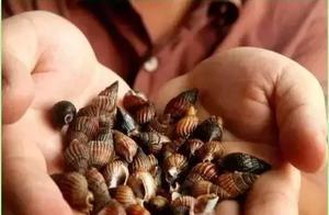 紧急!福建多人食用这种海鲜中毒!有人不治身亡!