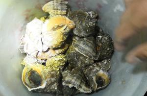 这地方海螺泛滥了,只因太危险少有人去,小青15分钟就爆了桶!