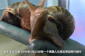 为什么蜗牛能不吃不喝四年都没事?