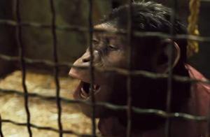 小伙侮辱猩猩,猩猩霸气反击,竟遭来小伙更严重的虐待