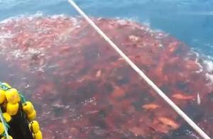 渔夫一网能打尽多少鱼?这个视频告诉你,这一点很重要