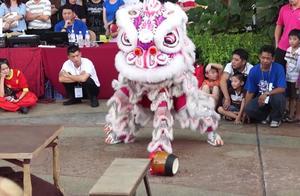 传统舞狮比赛,蒲种莲花宫醒狮团出演,喝醉酒的狮子
